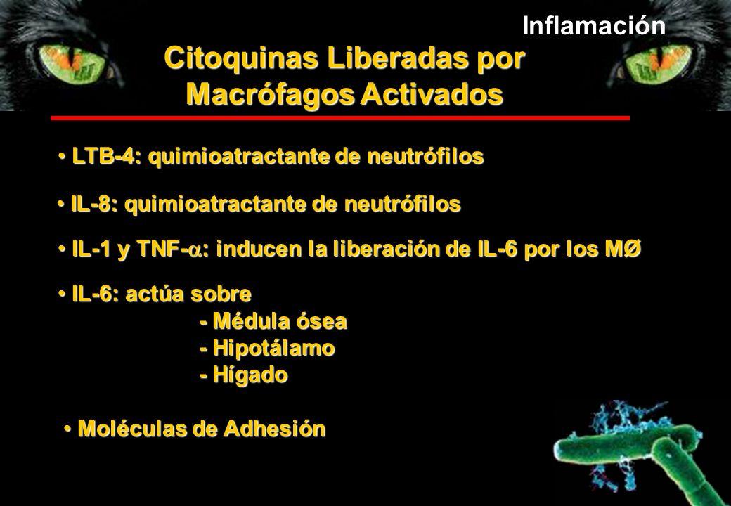 Citoquinas Liberadas por Macrófagos Activados IL-8: quimioatractante de neutrófilos IL-8: quimioatractante de neutrófilos LTB-4: quimioatractante de n
