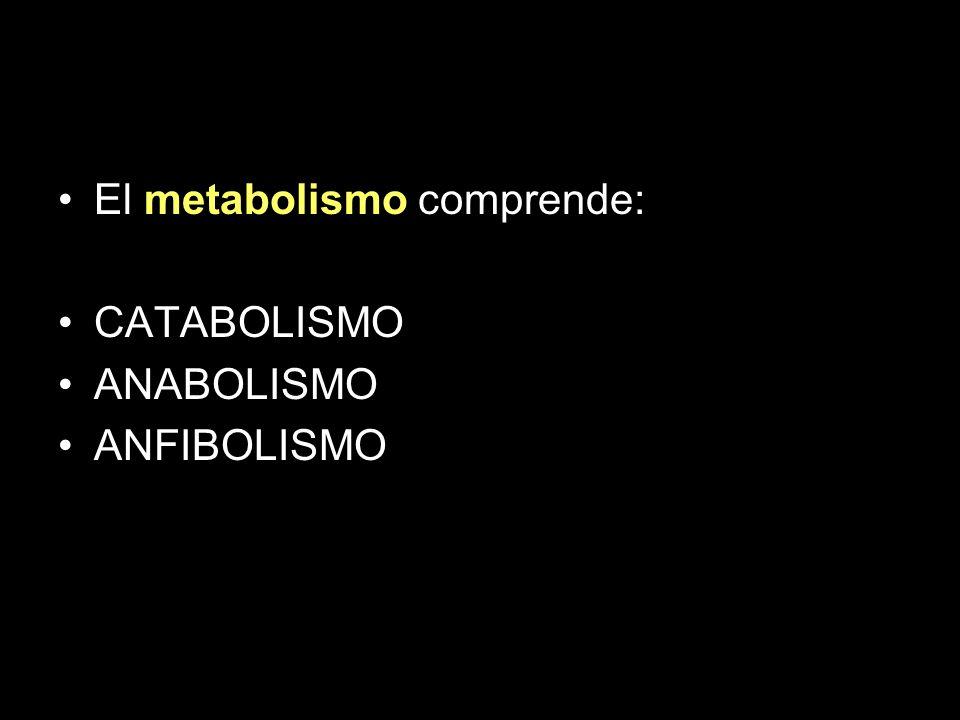 Coenzimas de Nicotinamida Transfieren 2 electrones Transfieren un ión hidruro (H - ) desde y hacia los diferentes sustratos Dos importantes coenzimas son: –Nicotinamida adenin dinucleotido (NAD + ) –Nicotinamida adenin dinucleotido fosfato (NADP + )