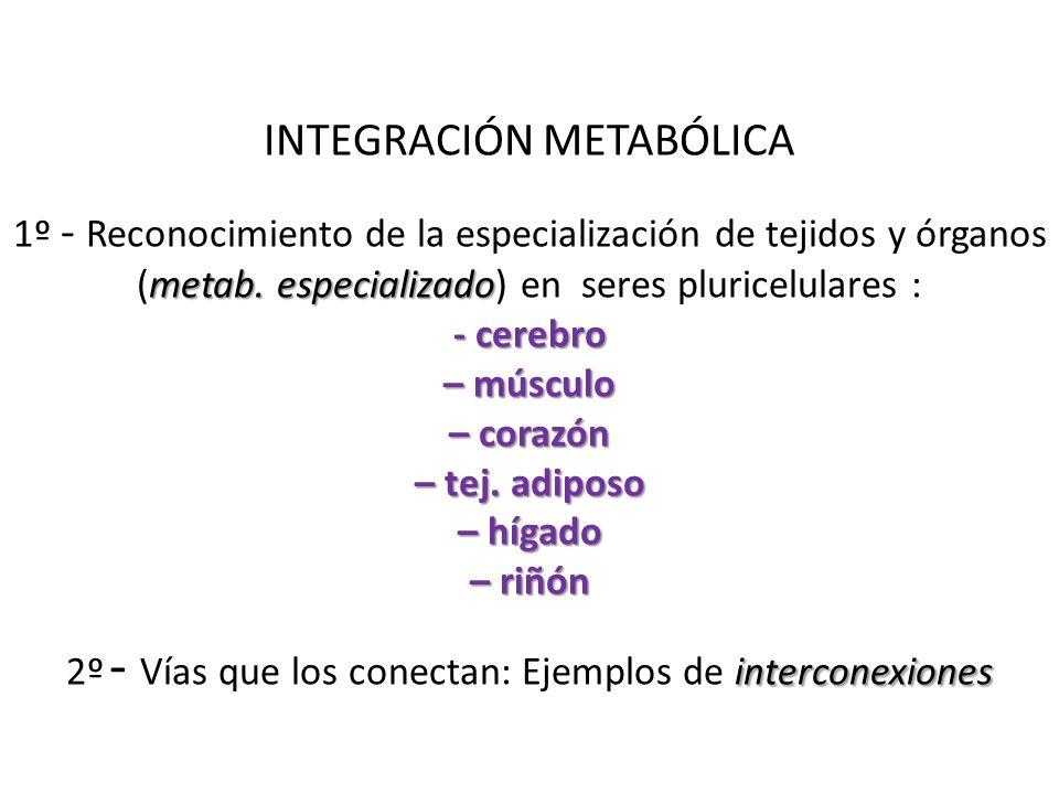 INTEGRACIÓN METABÓLICA 1º - Reconocimiento de la especialización de tejidos y órganos metab. (metab. especializado especializado) en seres pluricelula