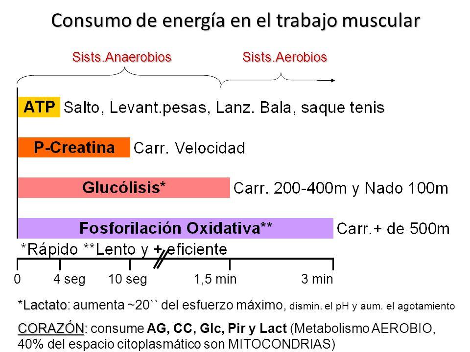 Consumo de energía en el trabajo muscular Lactato *Lactato: aumenta ~20`` del esfuerzo máximo, dismin. el pH y aum. el agotamiento CORAZÓN: CORAZÓN: c