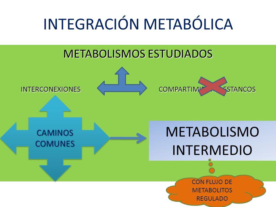 Integración metabólica en estado de realimentación