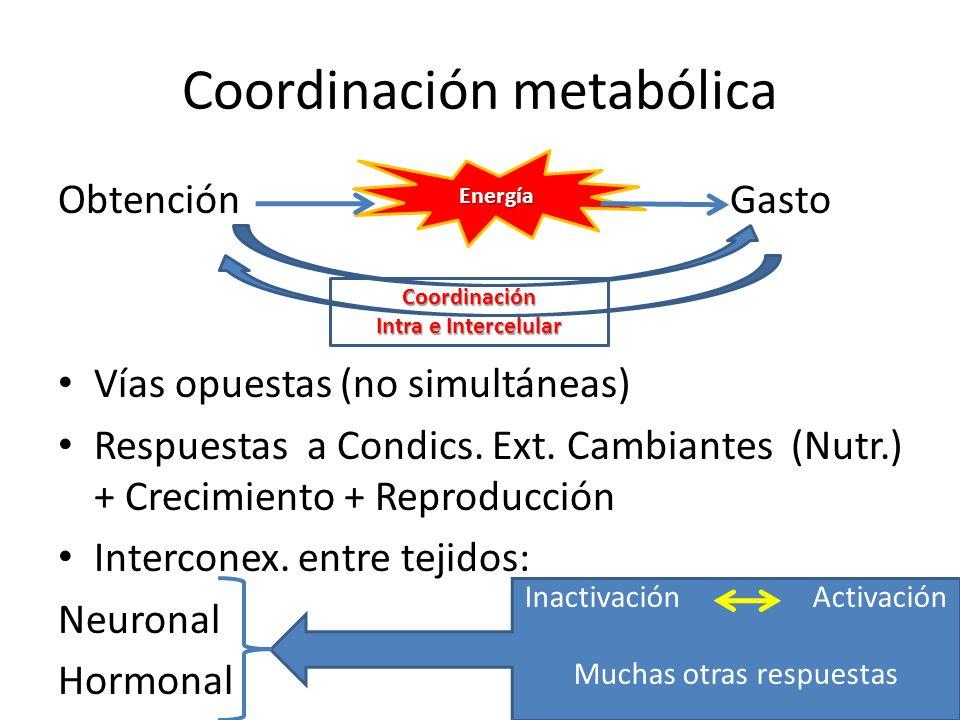 Coordinación metabólica ObtenciónGasto Vías opuestas (no simultáneas) Respuestas a Condics. Ext. Cambiantes (Nutr.) + Crecimiento + Reproducción Inter