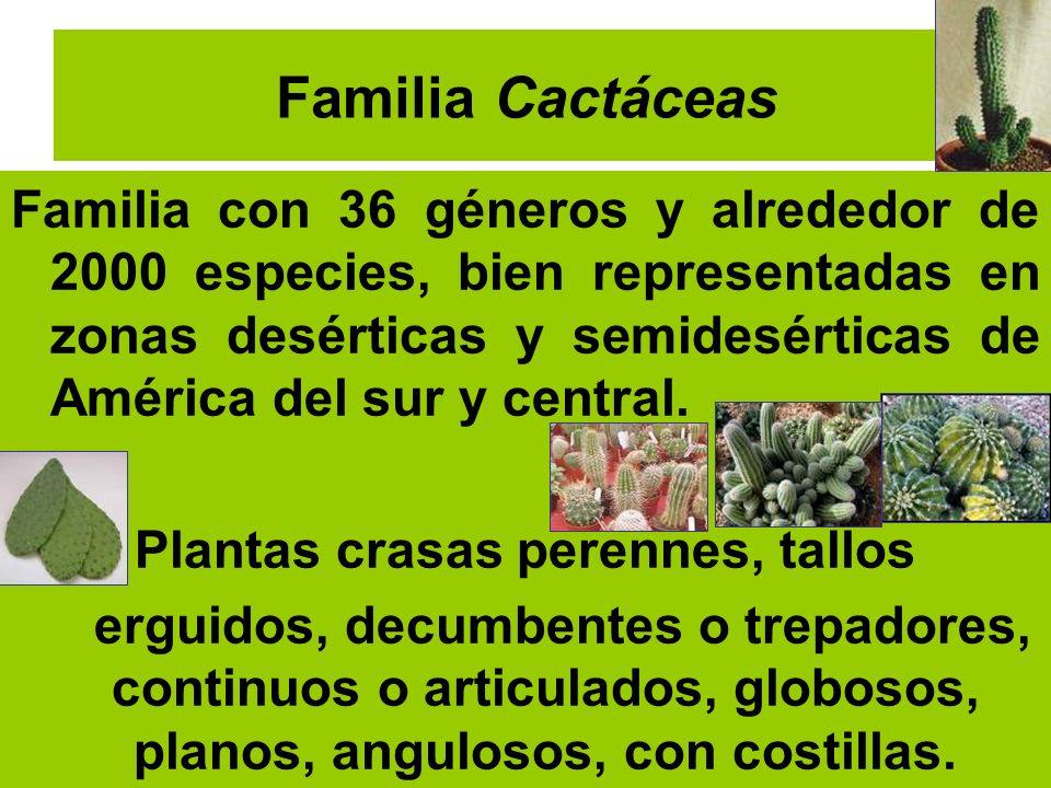 Familia Cactáceas Familia con 36 géneros y alrededor de 2000 especies, bien representadas en zonas desérticas y semidesérticas de América del sur y ce