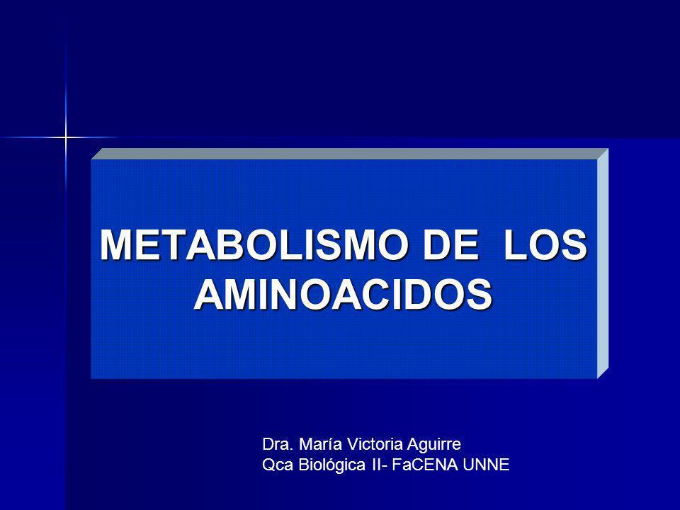 METABOLISMO DE LOS AMINOACIDOS Dra. María Victoria Aguirre Qca Biológica II- FaCENA UNNE