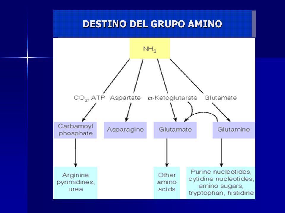 DESTINO DEL GRUPO AMINO