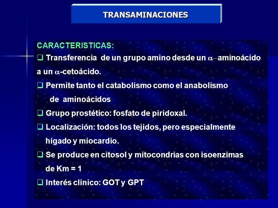 TRANSAMINACIONES CARACTERISTICAS: Transferencia de un grupo amino desde un aminoácido a un -cetoácido. Permite tanto el catabolismo como el anabolismo