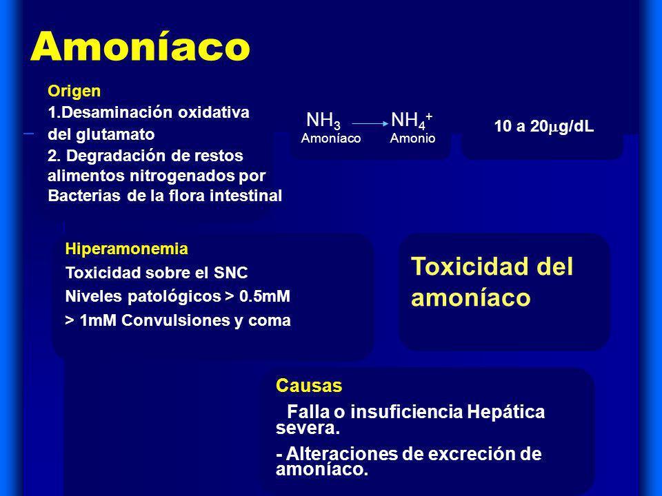 Amoníaco NH 3 NH 4 + Amoníaco Amonio Origen 1.Desaminación oxidativa del glutamato 2. Degradación de restos alimentos nitrogenados por Bacterias de la