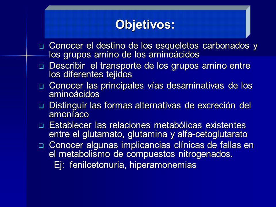 Conocer el destino de los esqueletos carbonados y los grupos amino de los aminoácidos Conocer el destino de los esqueletos carbonados y los grupos ami