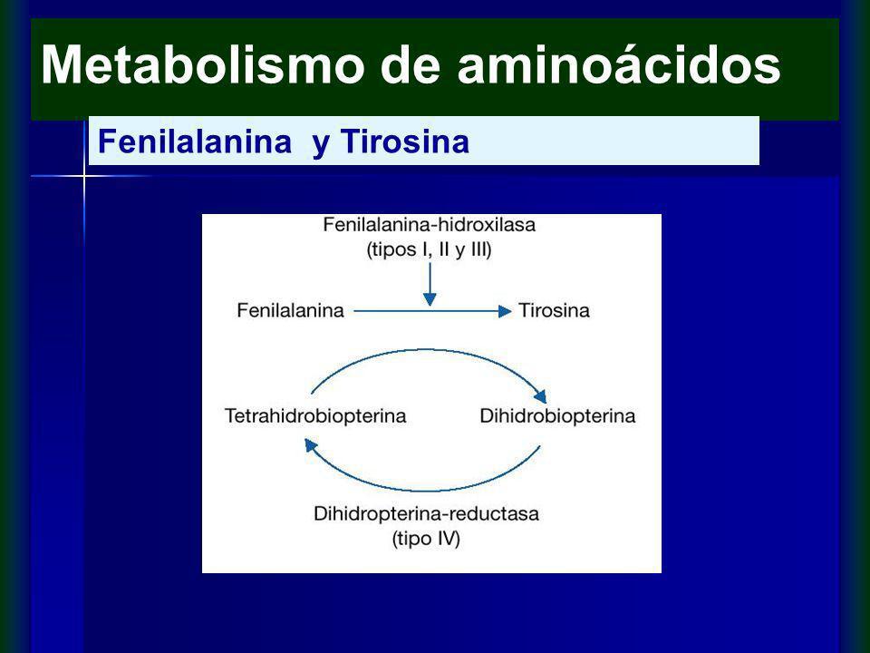 Metabolismo de aminoácidos Fenilalanina y Tirosina