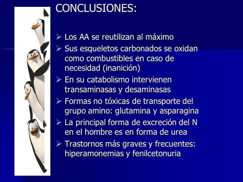 CONCLUSIONES: Los AA se reutilizan al máximo Los AA se reutilizan al máximo Sus esqueletos carbonados se oxidan como combustibles en caso de necesidad