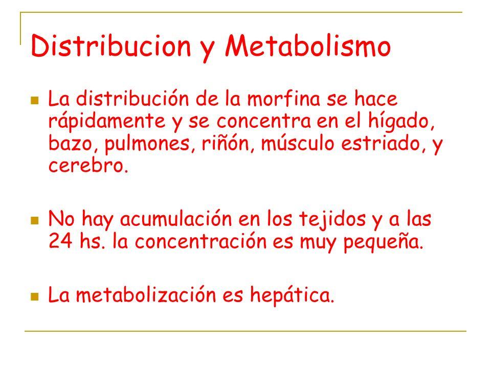 Distribucion y Metabolismo La distribución de la morfina se hace rápidamente y se concentra en el hígado, bazo, pulmones, riñón, músculo estriado, y c