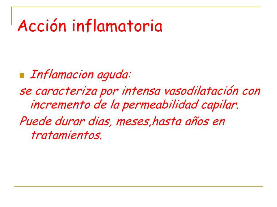 Acción inflamatoria Inflamacion aguda: se caracteriza por intensa vasodilatación con incremento de la permeabilidad capilar. Puede durar dias, meses,h