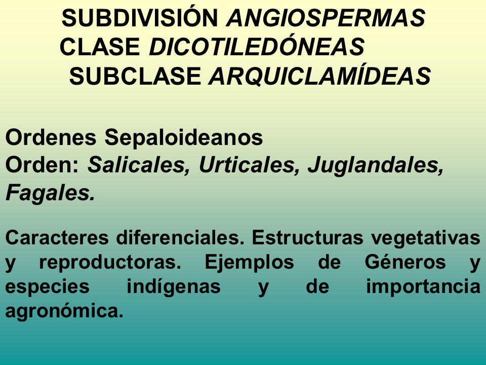 SUBDIVISIÓN ANGIOSPERMAS CLASE DICOTILEDÓNEAS SUBCLASE ARQUICLAMÍDEAS Ordenes Sepaloideanos Orden: Salicales, Urticales, Juglandales, Fagales. Caracte