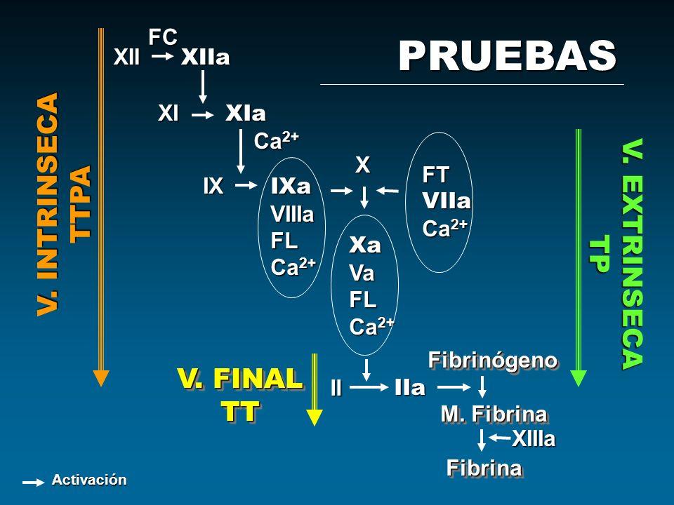 XII XIIa XI XIa IX IXa VIIIaFL Ca 2+ FC XXaVaFL IIa IIa Fibrinógeno M. Fibrina M. Fibrina Fibrina FibrinaFibrinógeno M. Fibrina M. Fibrina Fibrina Fib
