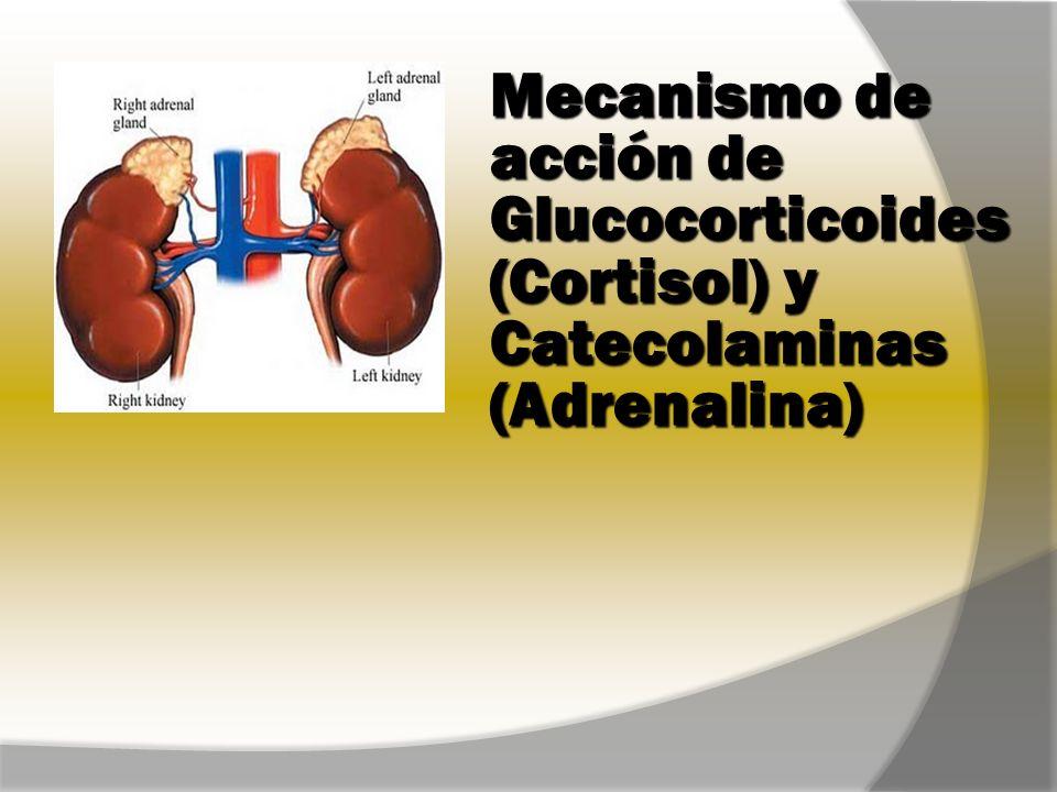 Objetivos de la clase: Glucocorticoides Conocer las hormonas secretadas en la corteza suprarrenal Distinguir las diferencias estructurales y los mecanismos de control de la secreción de las hormonas de la corteza suprarrenal Mencionar las hormonas esteroides de corteza y sus tejidos blanco Conocer el mecanismo general de acción de una hormona esteroide de la familia de los glucocorticoides: el Cortisol.