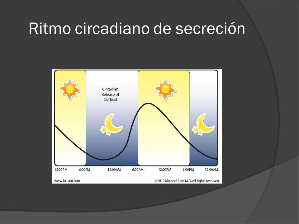 Ritmo circadiano de secreción