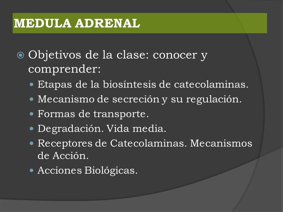 MEDULA ADRENAL Objetivos de la clase: conocer y comprender: Etapas de la biosíntesis de catecolaminas. Mecanismo de secreción y su regulación. Formas
