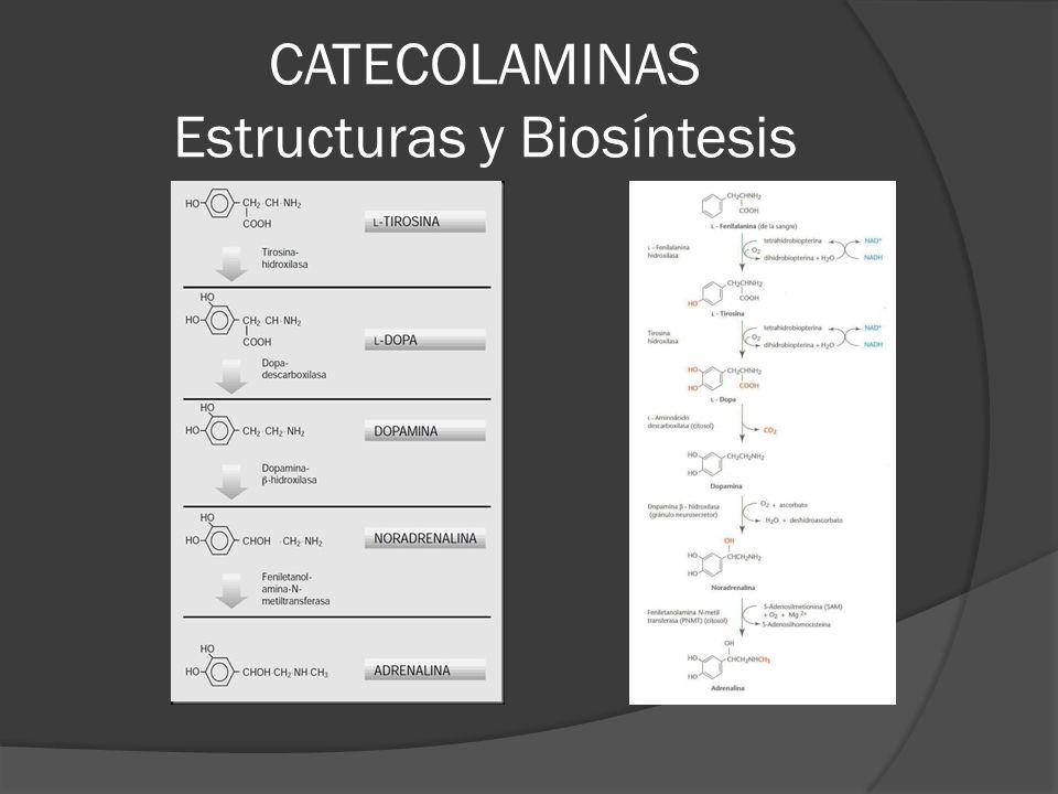 CATECOLAMINAS Estructuras y Biosíntesis