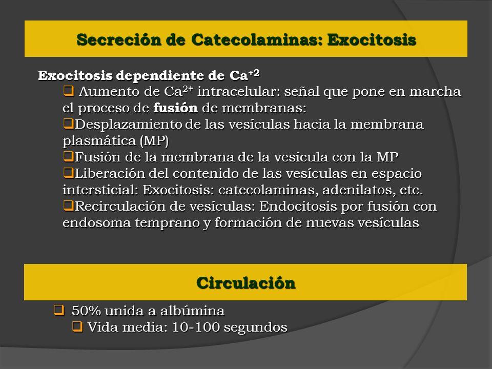 Exocitosis dependiente de Ca +2 Aumento de Ca 2+ intracelular: señal que pone en marcha el proceso de fusión de membranas: Aumento de Ca 2+ intracelul