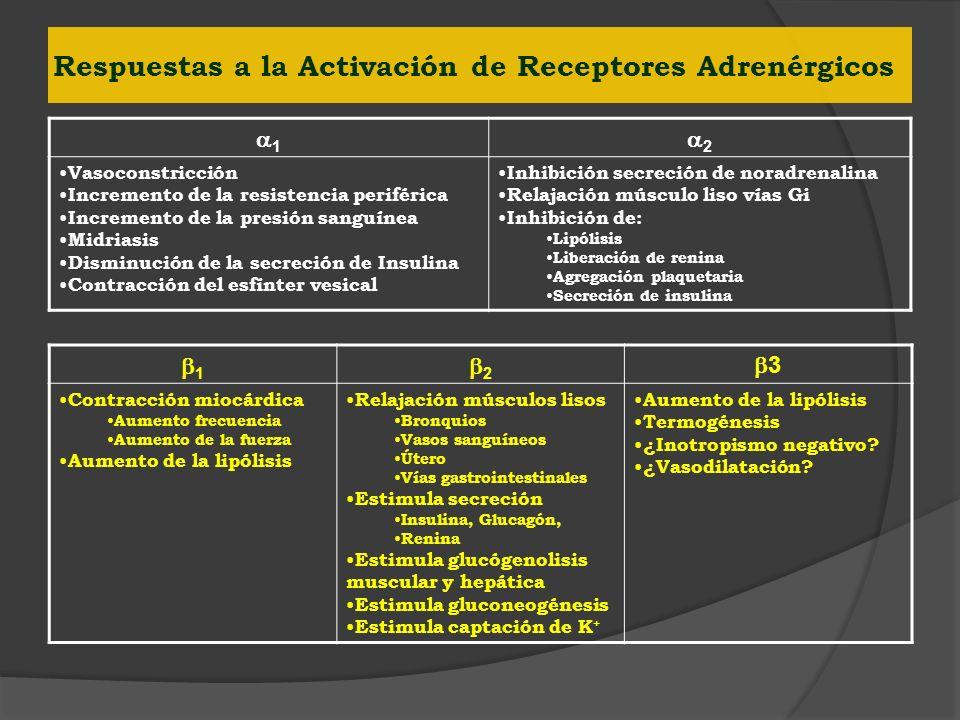 Respuestas a la Activación de Receptores Adrenérgicos 1 2 Vasoconstricción Incremento de la resistencia periférica Incremento de la presión sanguínea