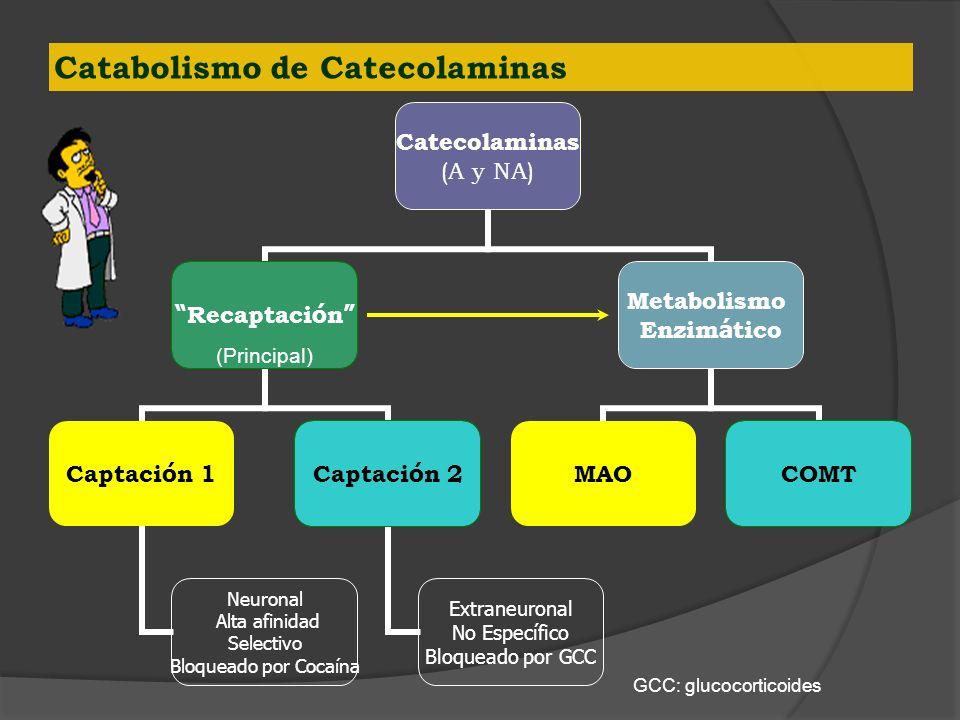 Catabolismo de Catecolaminas Catecolaminas (A y NA) Recaptaci ó n Captaci ó n 1 Neuronal Alta afinidad Selectivo Bloqueado por Cocaína Captaci ó n 2 E