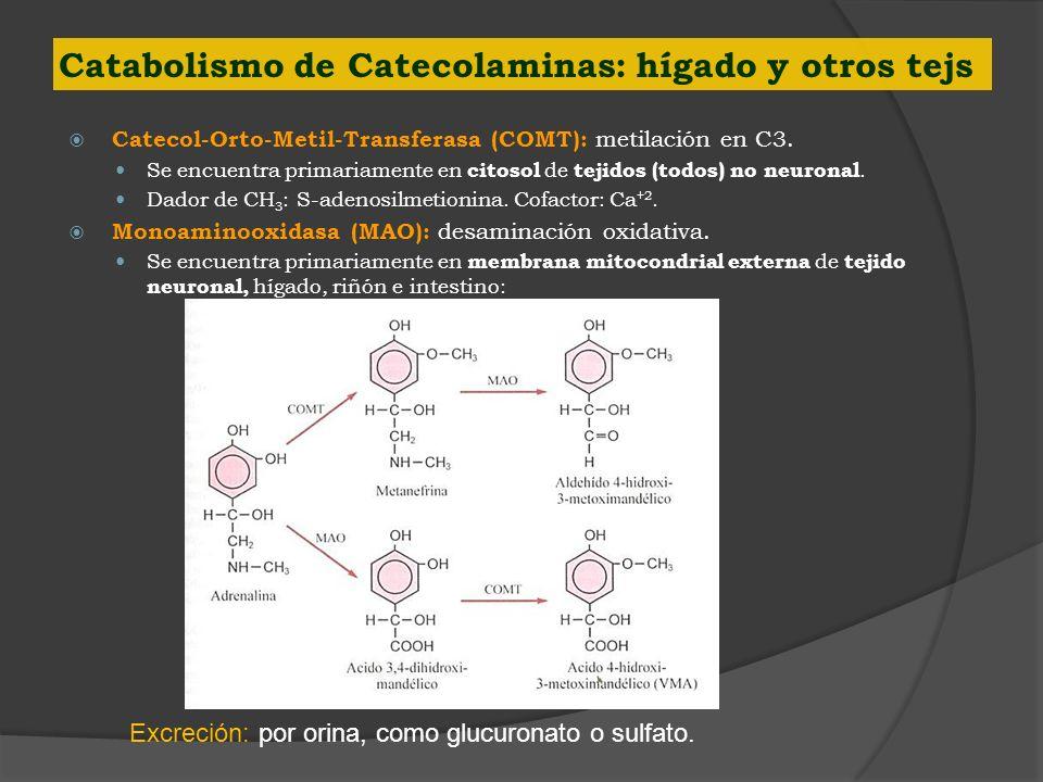 Catabolismo de Catecolaminas: hígado y otros tejs Catecol-Orto-Metil-Transferasa (COMT): metilación en C3. Se encuentra primariamente en citosol de te