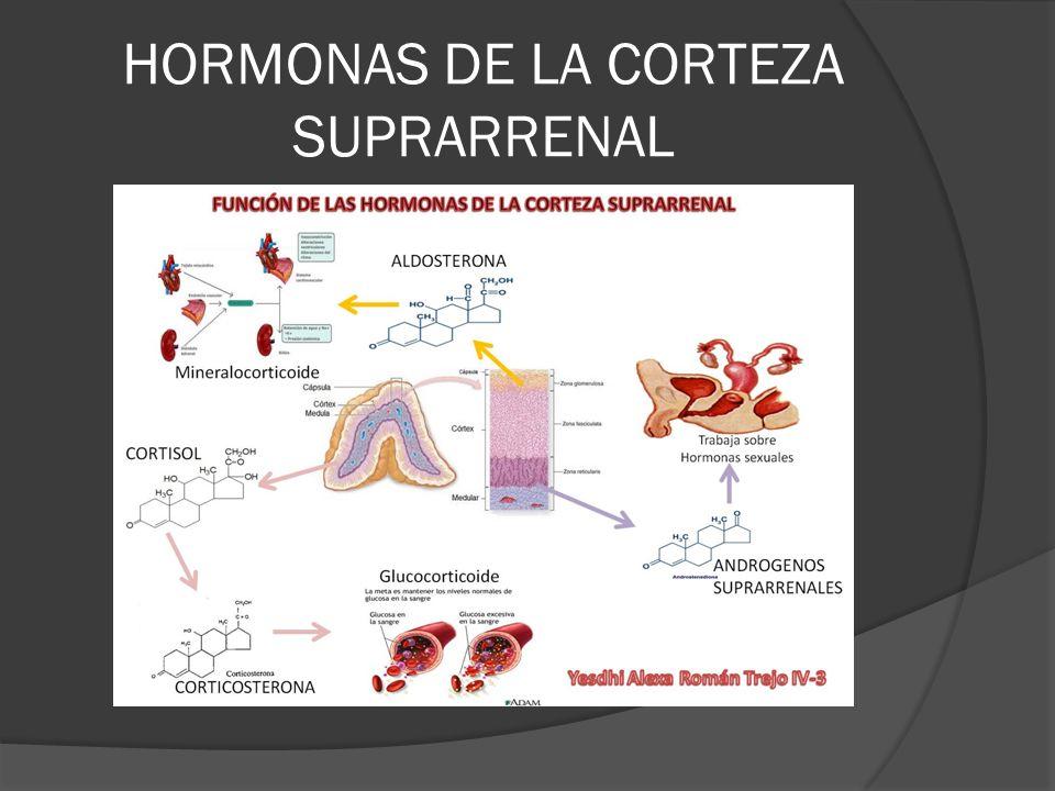 Respuestas a la Activación de Receptores Adrenérgicos 1 2 Vasoconstricción Incremento de la resistencia periférica Incremento de la presión sanguínea Midriasis Disminución de la secreción de Insulina Contracción del esfínter vesical Inhibición secreción de noradrenalina Relajación músculo liso vías Gi Inhibición de: Lipólisis Liberación de renina Agregación plaquetaria Secreción de insulina 1 2 3 Contracción miocárdica Aumento frecuencia Aumento de la fuerza Aumento de la lipólisis Relajación músculos lisos Bronquios Vasos sanguíneos Útero Vías gastrointestinales Estimula secreción Insulina, Glucagón, Renina Estimula glucógenolisis muscular y hepática Estimula gluconeogénesis Estimula captación de K + Aumento de la lipólisis Termogénesis ¿Inotropismo negativo.