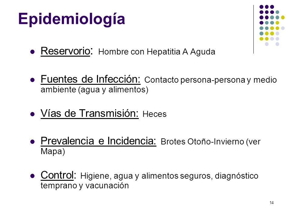 14 Epidemiología Reservorio : Hombre con Hepatitia A Aguda Fuentes de Infección: Contacto persona-persona y medio ambiente (agua y alimentos) Vías de