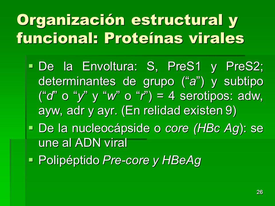 26 Organización estructural y funcional: Proteínas virales De la Envoltura: S, PreS1 y PreS2; determinantes de grupo (a) y subtipo (d o y y w o r) = 4