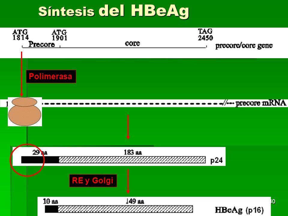 30 RE y Golgi Polimerasa Síntesis del HBeAg