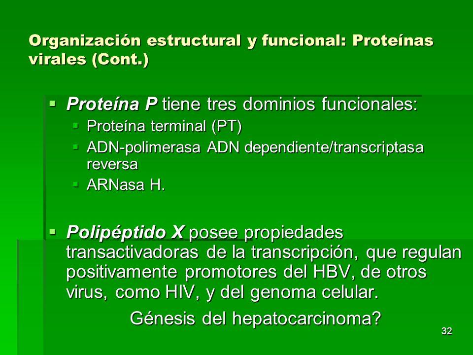 32 Organización estructural y funcional: Proteínas virales (Cont.) Proteína P tiene tres dominios funcionales: Proteína P tiene tres dominios funciona