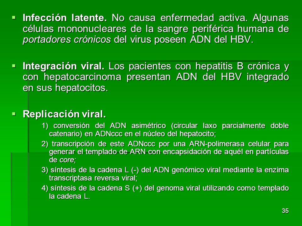 35 Infección latente. No causa enfermedad activa. Algunas células mononucleares de la sangre periférica humana de portadores crónicos del virus poseen