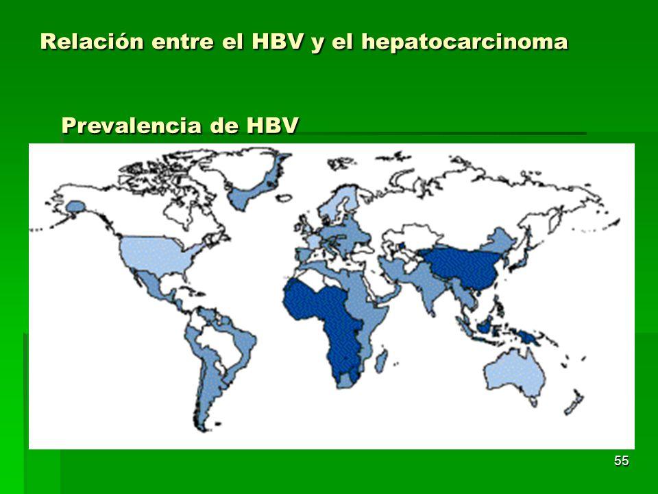 55 Relación entre el HBV y el hepatocarcinoma Prevalencia de HBV