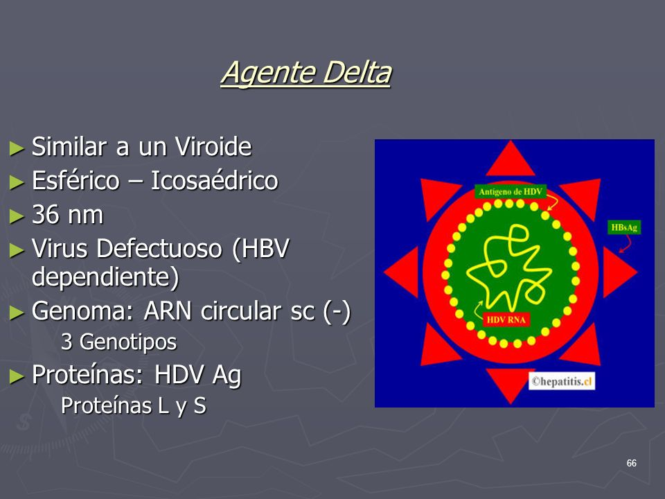 66 Agente Delta Similar a un Viroide Esférico – Icosaédrico 36 nm Virus Defectuoso (HBV dependiente) Genoma: ARN circular sc (-) 3 Genotipos Proteínas