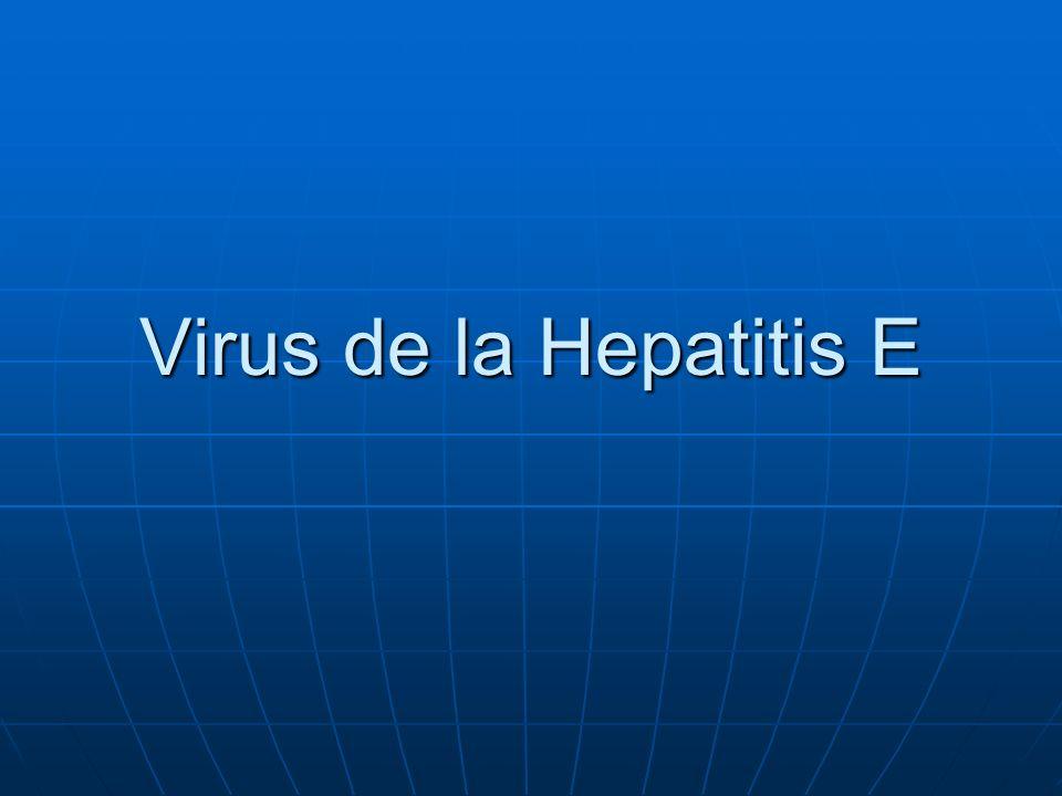 Virus de la Hepatitis E