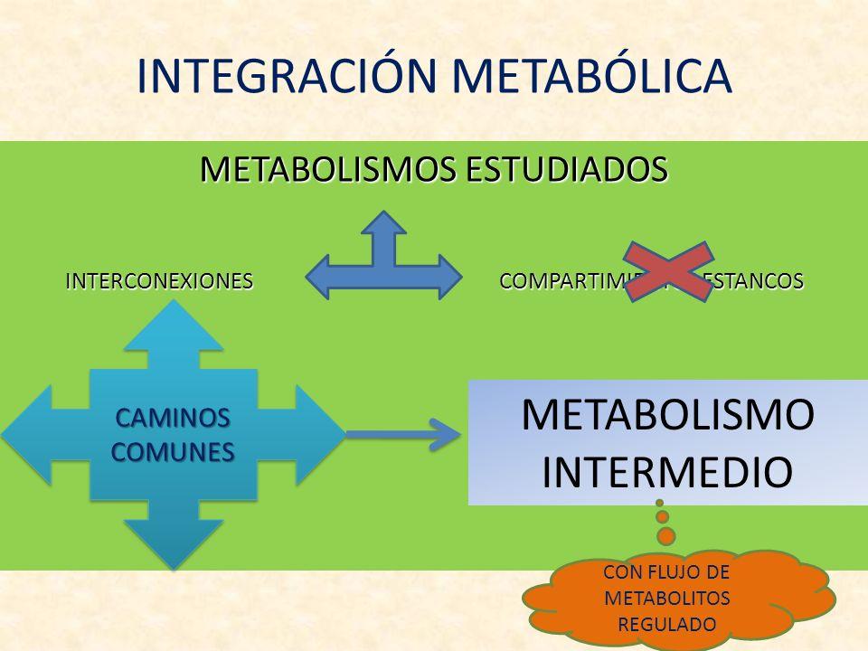 INTEGRACIÓN METABÓLICA METABOLISMOS ESTUDIADOS INTERCONEXIONES COMPARTIMIENTOS ESTANCOS CAMINOS COMUNES METABOLISMO INTERMEDIO CON FLUJO DE METABOLITO