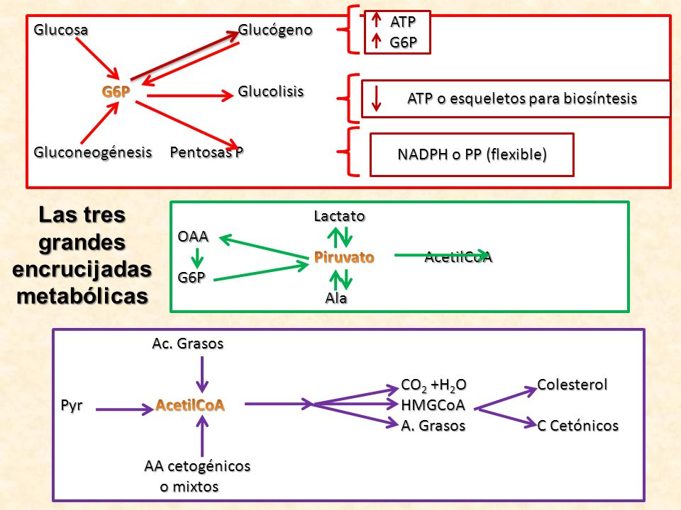 Características Principales y únicas del metabolismo de los órganos más importantes