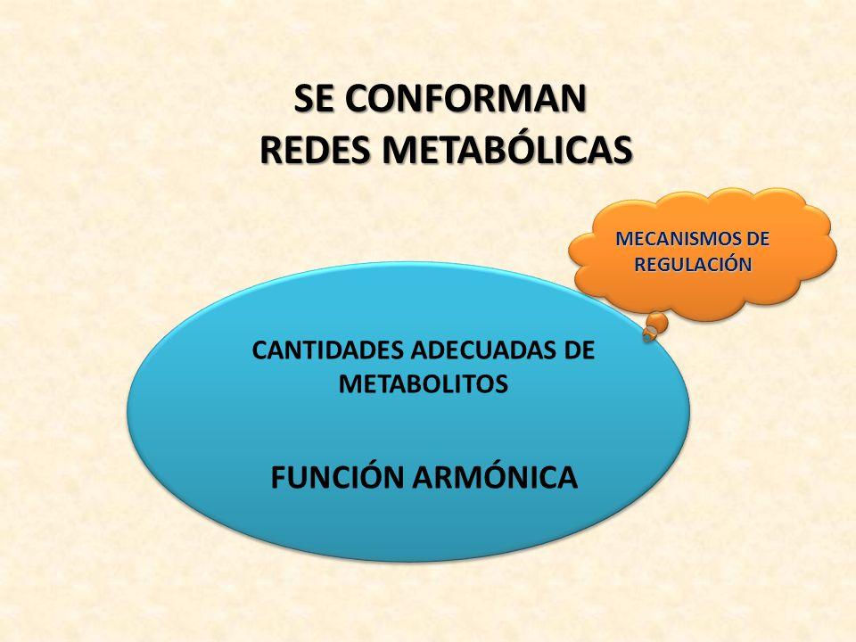 FUNCIÓN ARMÓNICA CANTIDADES ADECUADAS DE METABOLITOS SE CONFORMAN REDES METABÓLICAS MECANISMOS DE REGULACIÓN