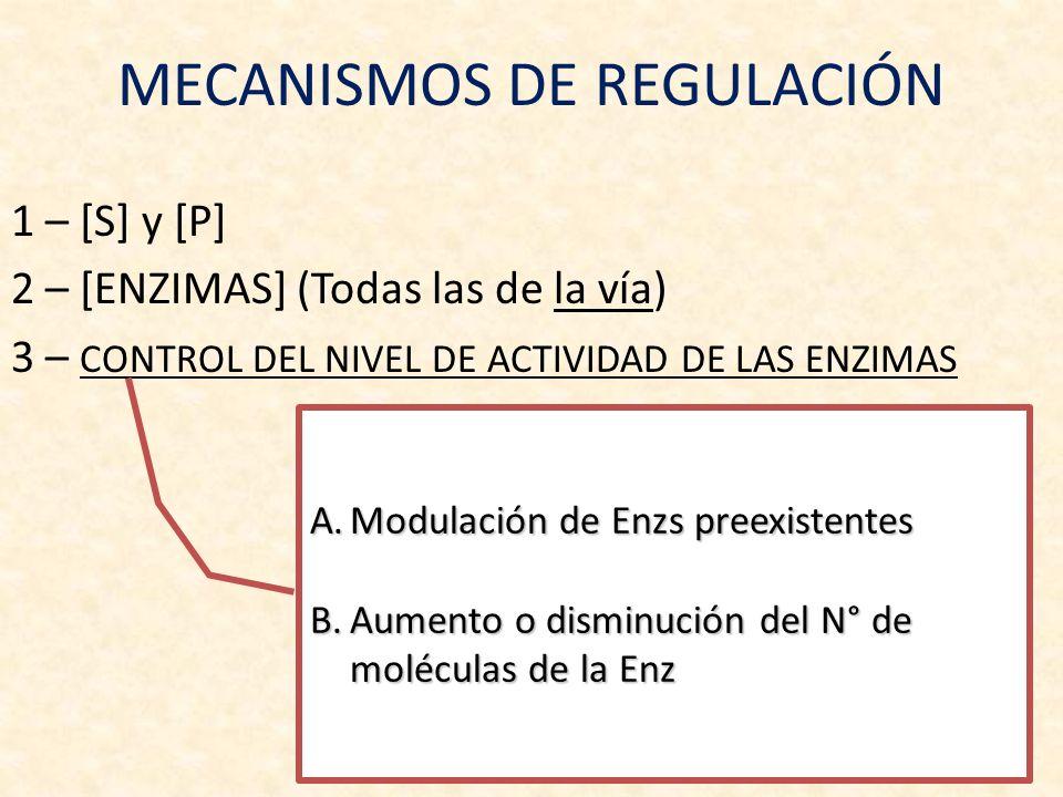 A.Modulación de Enzs preexistentes [S] si es = o < a su K M [S] si es = o < a su K M Metabolitos regulatorios (efectores alostéricos + ó -) Metabolitos regulatorios (efectores alostéricos + ó -) Modificaciones covalentes (fosforilaciones) Modificaciones covalentes (fosforilaciones) B.