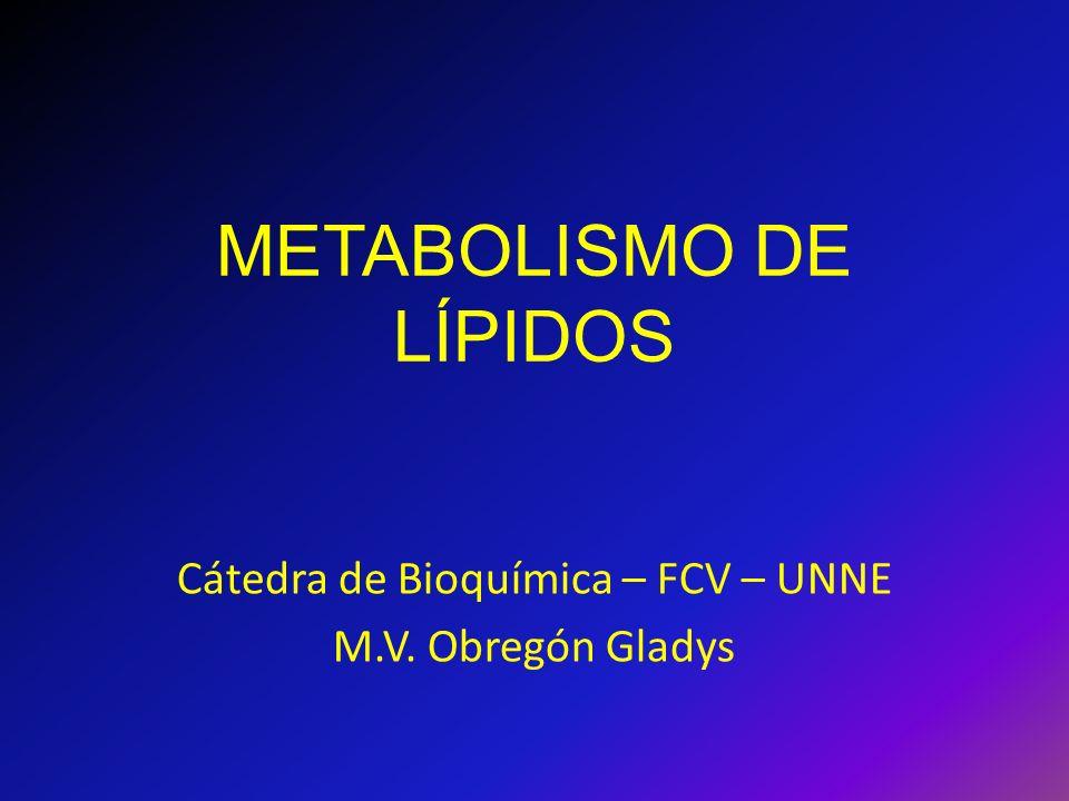 AG poliinsaturados y vitaminas Dieta.