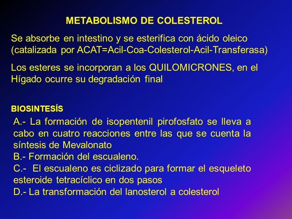 METABOLISMO DE COLESTEROL Se absorbe en intestino y se esterifica con ácido oleico (catalizada por ACAT=Acil-Coa-Colesterol-Acil-Transferasa) Los este