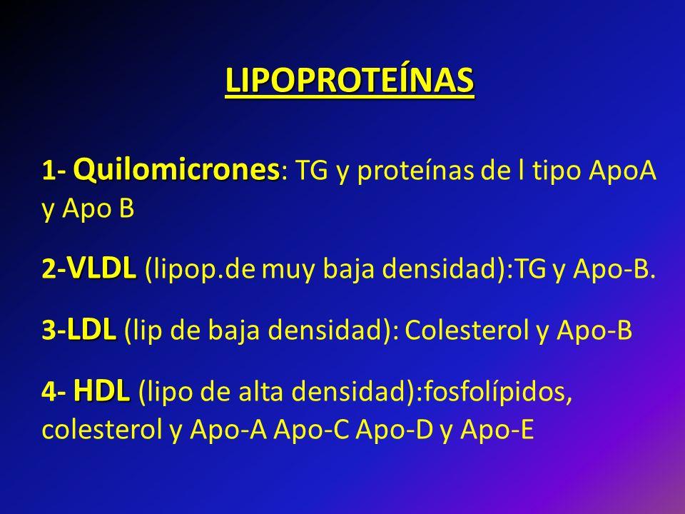 LIPOPROTEÍNAS Quilomicrones 1- Quilomicrones : TG y proteínas de l tipo ApoA y Apo B VLDL 2- VLDL (lipop.de muy baja densidad):TG y Apo-B. LDL 3- LDL