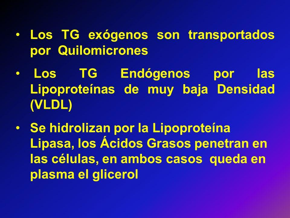 Los TG exógenos son transportados por Quilomicrones Los TG Endógenos por las Lipoproteínas de muy baja Densidad (VLDL) Se hidrolizan por la Lipoproteí