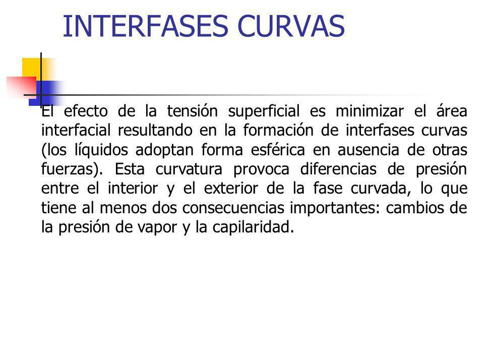 INTERFASES CURVAS El efecto de la tensión superficial es minimizar el área interfacial resultando en la formación de interfases curvas (los líquidos a