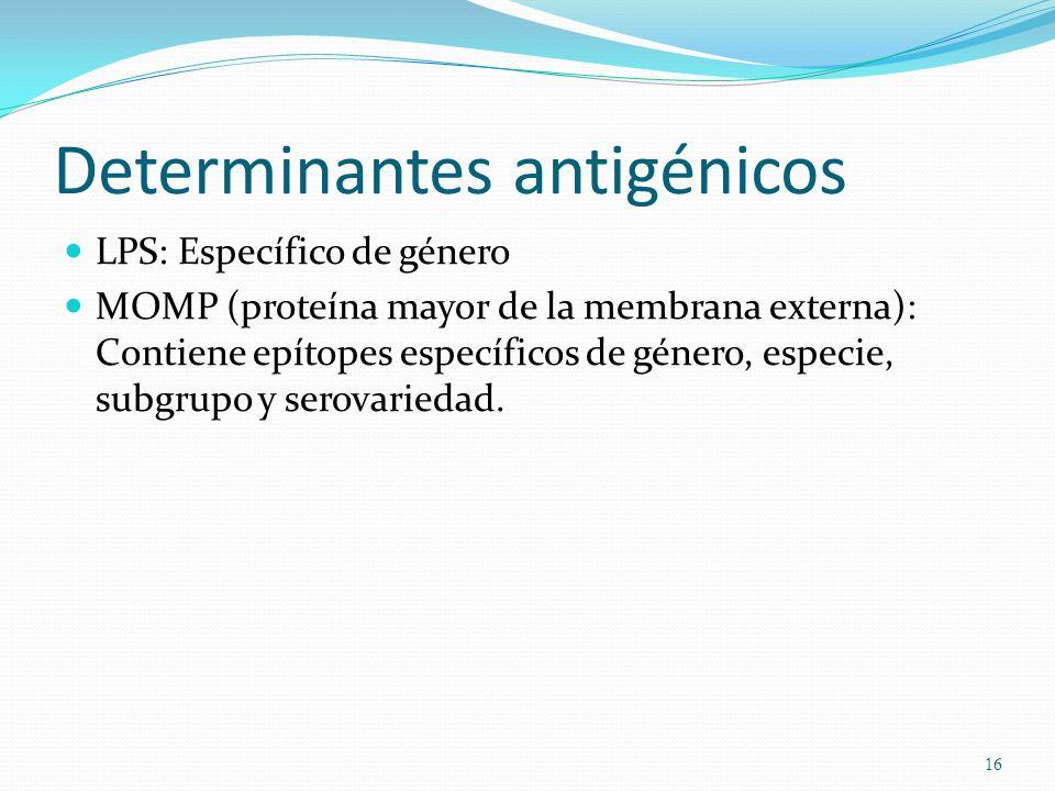 Determinantes antigénicos LPS: Específico de género MOMP (proteína mayor de la membrana externa): Contiene epítopes específicos de género, especie, su