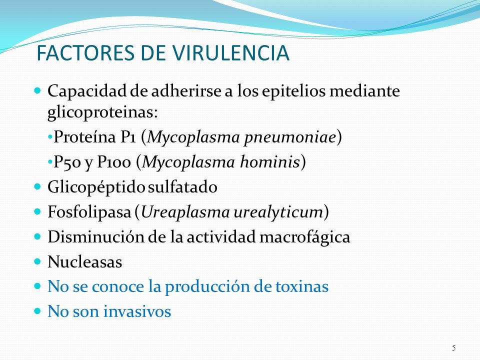 FACTORES DE VIRULENCIA Capacidad de adherirse a los epitelios mediante glicoproteinas: Proteína P1 (Mycoplasma pneumoniae) P50 y P100 (Mycoplasma homi