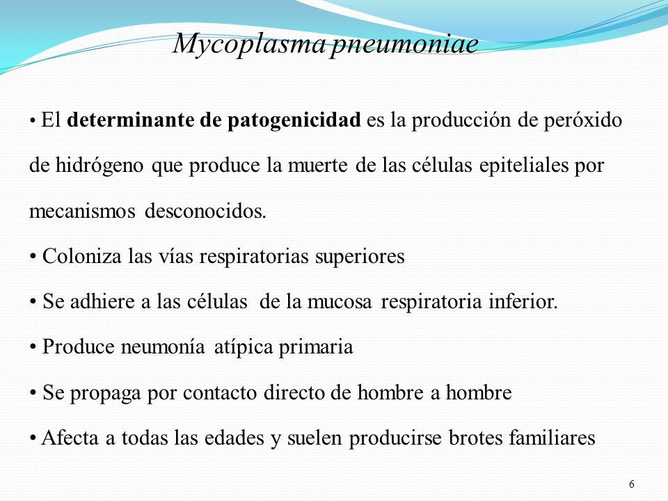 6 Mycoplasma pneumoniae El determinante de patogenicidad es la producción de peróxido de hidrógeno que produce la muerte de las células epiteliales po