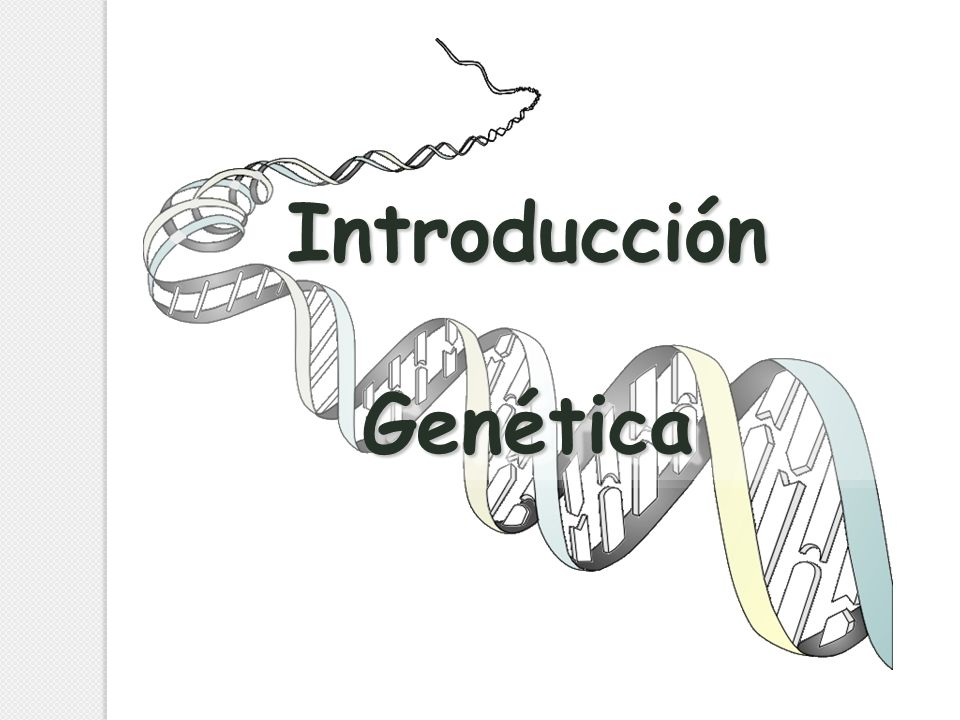 IntroducciónGenéticaIntroducciónGenética