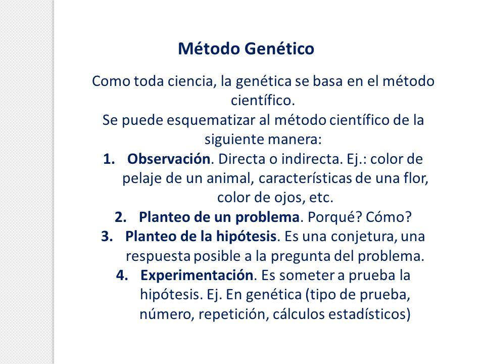 Método Genético Como toda ciencia, la genética se basa en el método científico. Se puede esquematizar al método científico de la siguiente manera: 1.
