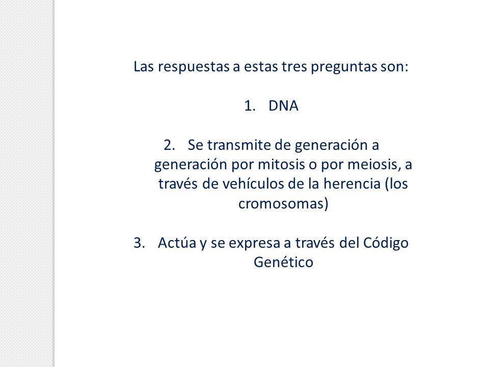 Las respuestas a estas tres preguntas son: 1. 1.DNA 2. 2.Se transmite de generación a generación por mitosis o por meiosis, a través de vehículos de l